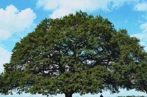 Article : Une larme pour mes chers arbres